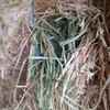 300mt approx of good Oaten Hay for Sale Del only!