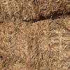 Barley Hay 8x4x3 Approx 680 kg bales 600 available Drought affected crop that tested well