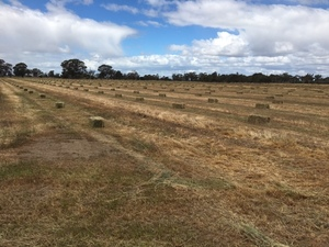 Small Squares Grass Hay