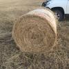 200 Freshly Baled Rhodes & Blue Grass Hay in 4x4 Rolls