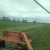 Balansa Clover Hay in Small Bales x 1000 ex farm