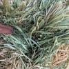 Mobey barley hay