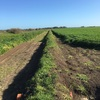 300 Acre Irrigation / Dry Land - Mixed Farming Land For Sale