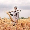 Grain Report - Indian Farmers fighting government reforms…
