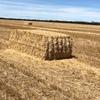 70mt Wheaten Straw 8x4x3 Bales