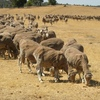 NSW Government to have a crack at Drought Insurance