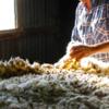 Wool price tread water yesterday