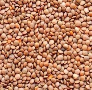 42mt feed lentils
