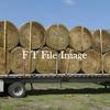 Vetch Barley Hay in 5x4 Rolls For Sale