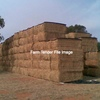 Canola Hay For Sale in 8x4x3's -  Delivered