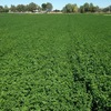 Fodder factory, 282 acres,110 acres sown to lucerne, 700 meg unregulated bores, professional equestrian facility