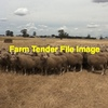 1000 Glendemar Blood Ewes wanted