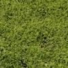 Clover Hay ( Balansa ) 8x4x3 - 500 x 500 KG Approx Bales