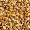 120 m/t New Season Corn For Sale