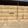 For Sale 90mt Barley/lucerne Hay in 8x4x3
