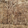260 x 8x4x3's bales of Vetch Hay for sale asap!