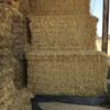 Wheat Straw 8x4x3 Bales