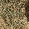 Oaten Hay  Approximately 300 - Rolls - To Be SOLD By the Bale