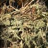 Vetch ( Popany ) Hay 8x4x3 - 470 x 550 KG Approx Bales & Shedded