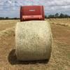 New Season Rye, Clover, Lucerne Hay 5x4 rolls.
