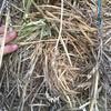 Wheat / Rye Grass Hay 8X4X3