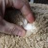 Wool market struggles