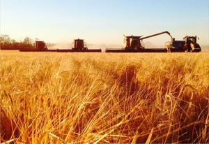 Harvesting Contractor Available Now! 3 Headers, Chaser Bin & Trucks At Tamworth today! Can Float for Transport!