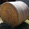 Ryegrass hay for sale
