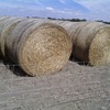 200 Rolls of Vetch Hay