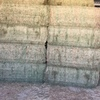 Lucerne Hay 500 m/t Prompt Pick Up & Payment.