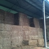 Hay Vetch 8x4x3 Shedded 500 KG Approx Bales