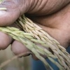 Ag Tech Sunday - Agriculture supply-chain optimisation and value creation