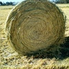 New Season Moby Barley Hay For in Rolls