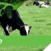 CS Pasture Liquid Fertiliser For Sale P, K, Ca and micro-nutrients- Magnesium, Copper, Zinc, Manganese, Sulphur, Boron, Cobalt, Nickel and Molybdenum