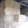 Big Square Hay Bales For Sale ex or Del