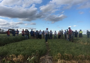 Pulses gaining in popularity in Northern Vic