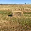 Oaten Rye Grass Hay - THIS SEASON