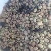 Faba beans (warda)