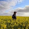 SA seeks to lifts ban on GM Crops