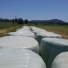 Silage Rounds ( Rye grass & Clover ) 200 x Rolls.