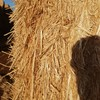 65tn wheaten straw hay. Baled with sieve loss material