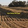 Rice Straw - Large square bales - 8x4x3