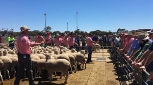 Big numbers at Bendigo Sheep and Lambs