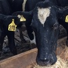 Dairy Industry - Where are we at?