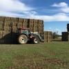 250/mt of Organic Millet Hay