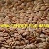 150/MT Hurricane Lentils For Sale Ex Farm