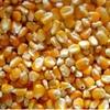 Maize 200T price ex farm