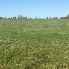 6000 Rye & Clover Hay in Small Squares