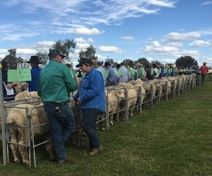 Ballatherie Poll Merino to a top of $4000