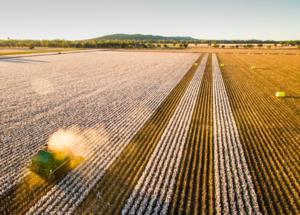 Future Cotton Leaders program applicants announced
